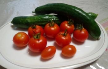 20140722夕方収穫きゅうりとトマト