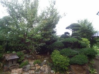 20140823庭木3