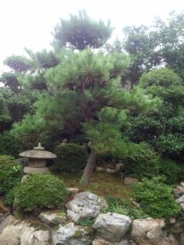 20140823庭木