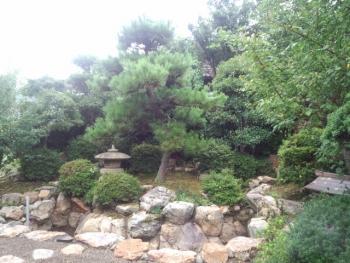 20140823庭木5
