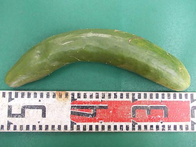 Cucumber 20140823
