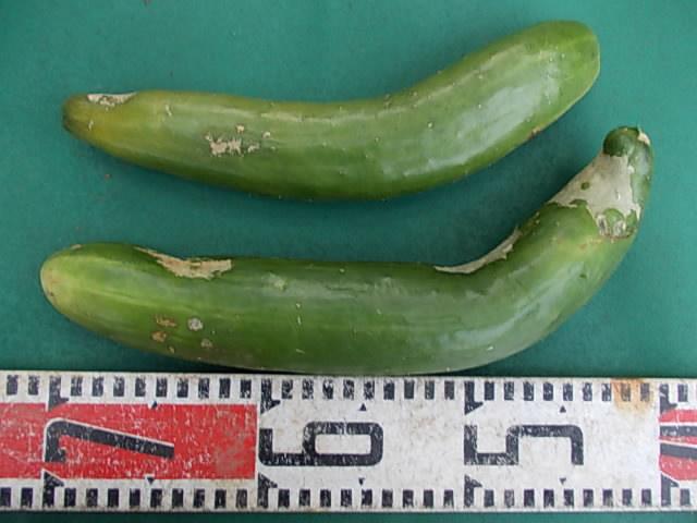 Cucumber 20140902