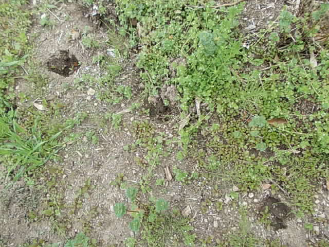 Boar's footprint 20140403