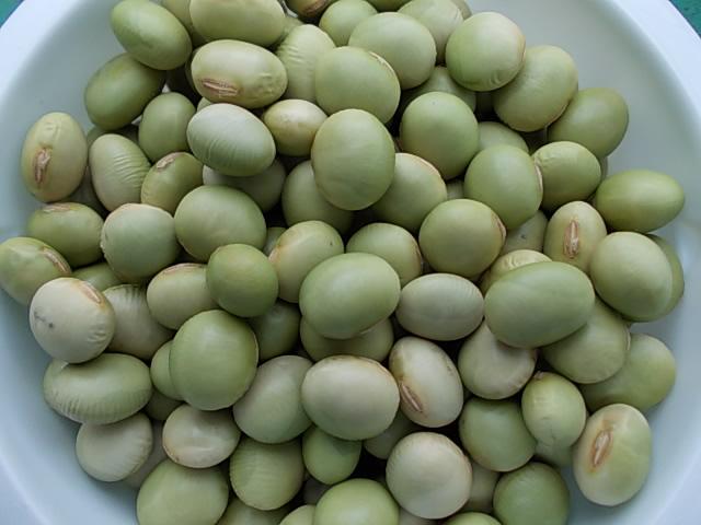 Hiden-mame soy bean 20140612