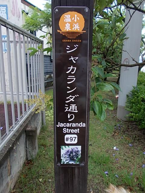 Jacaranda 20140610
