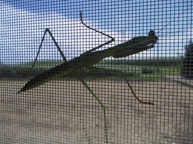 Mantis at home 20140807