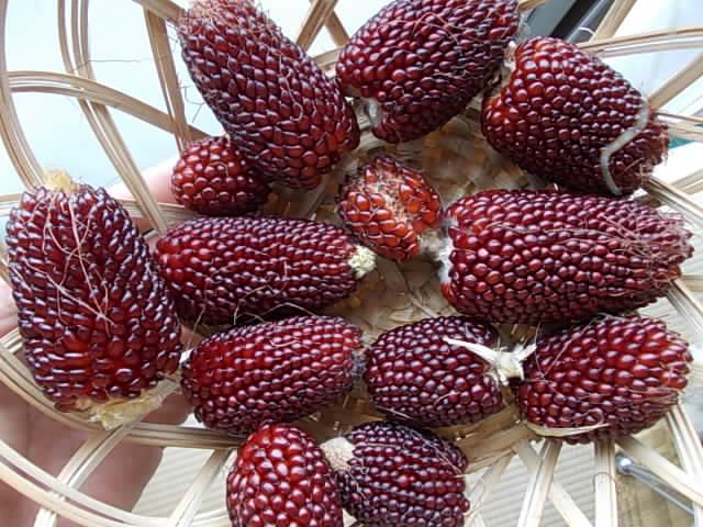Mealie strawberry popcorn 20140820