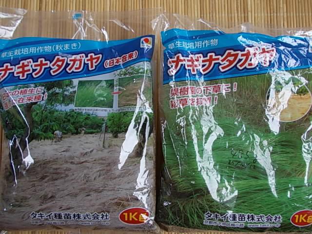 Naginatagaya cover crop 20140604