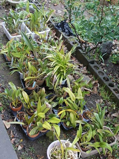 Orchids 20140226
