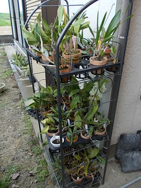 Orchids 20140412