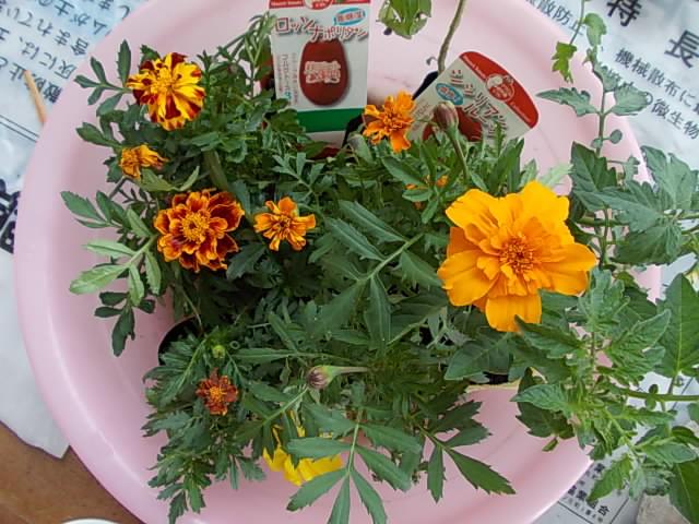 Plant pots 20140503
