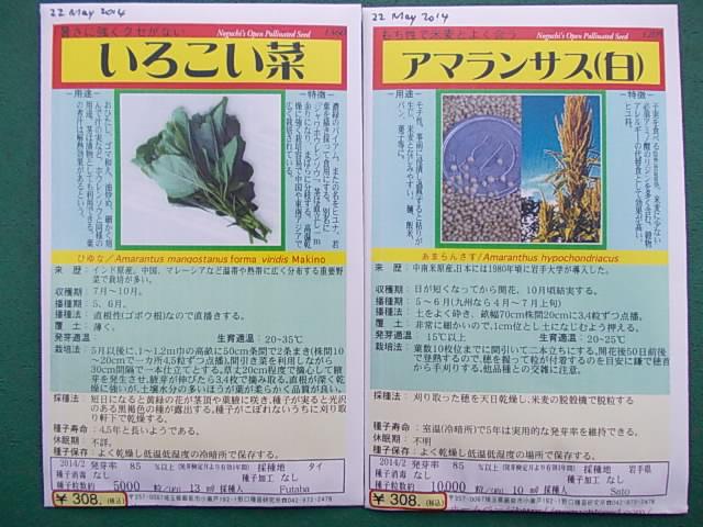 Amaranthi seeds 20140522