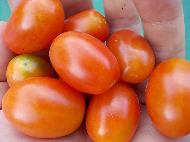 Tomato 20140716