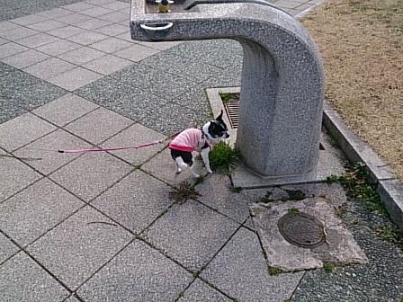 DSC_0367散歩