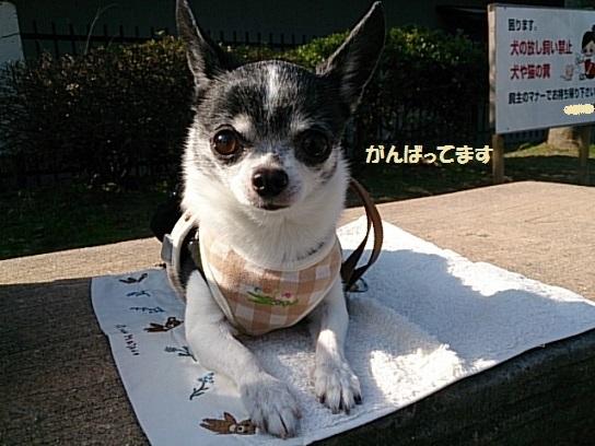 DSC_0375ふせ