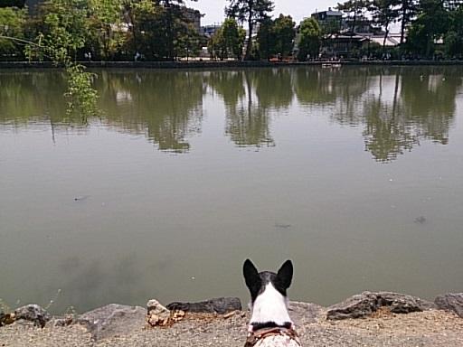 DSC_0595奈良
