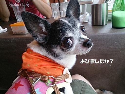 DSC_1049ま
