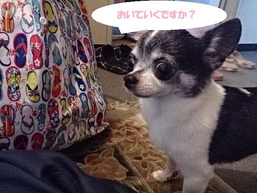 DSC_1092広島おいていくですか