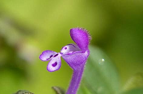 変わったお花♪