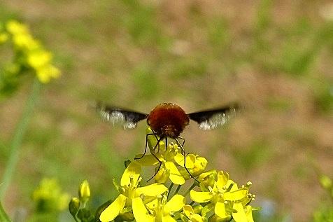 ハチさん♪