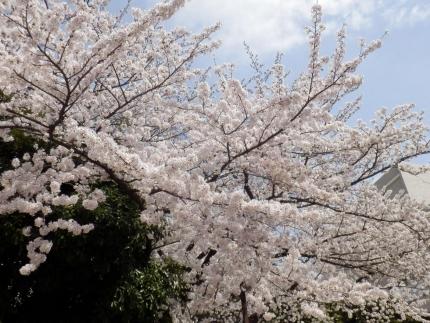 小野田商店 &花見 (1)