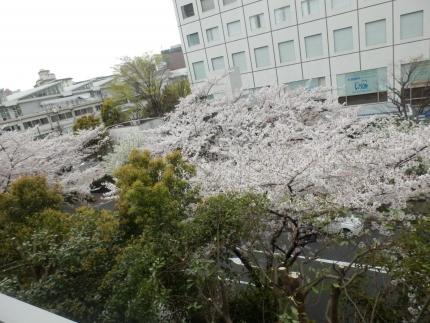 小野田商店 &花見 (12)