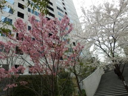 小野田商店 &花見 (17)