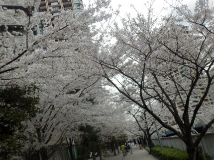 小野田商店 &花見 (18)