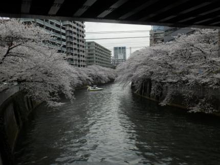 小野田商店 &花見 (24)