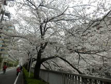 小野田商店 &花見 (26)