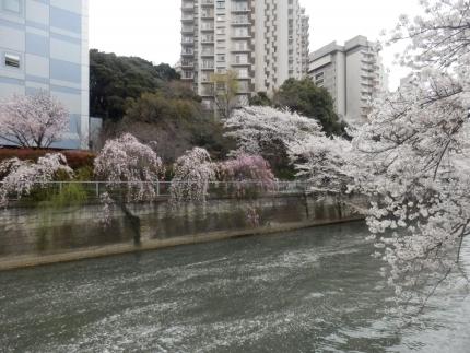 小野田商店 &花見 (28)