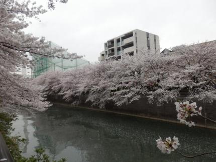 小野田商店 &花見 (46)