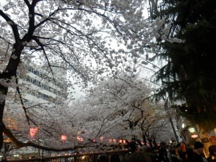小野田商店 &花見 (52)