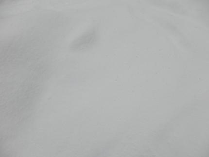 P2046178.jpg