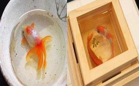 可愛い金魚だけど