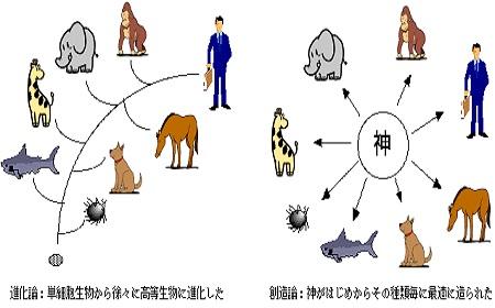 進化論化創造論