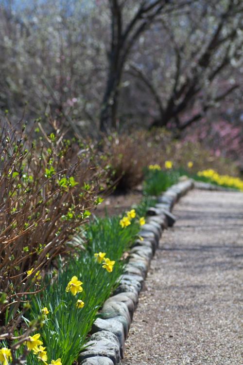 ここで 2度目の春