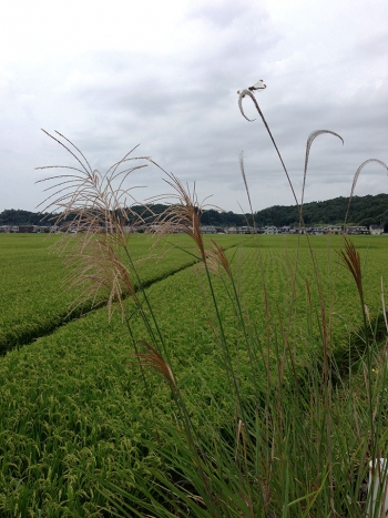 susukitonbo20140826.jpg