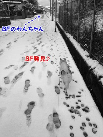 BF発見♪