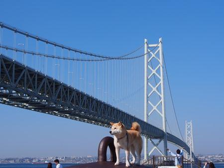 大橋に近づく!