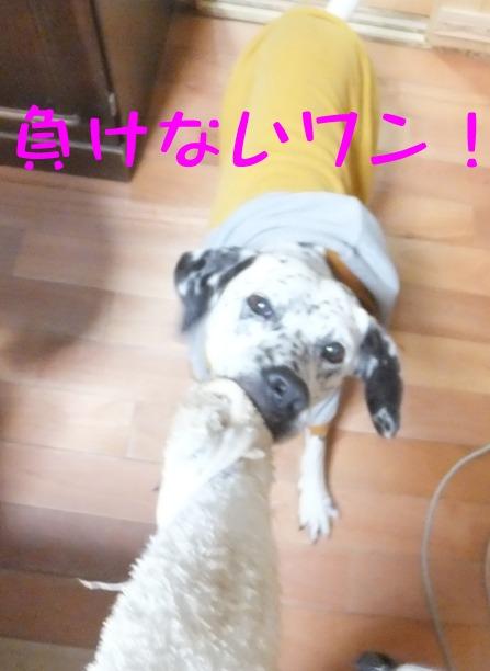 2014_0412_232319.jpg
