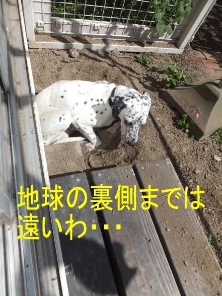 2014_0608_150359.jpg