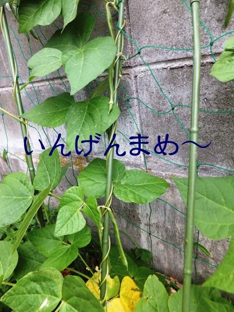 2014_0621_121559.jpg