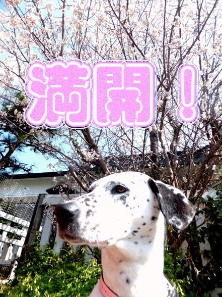 blog_0315_104841.jpg