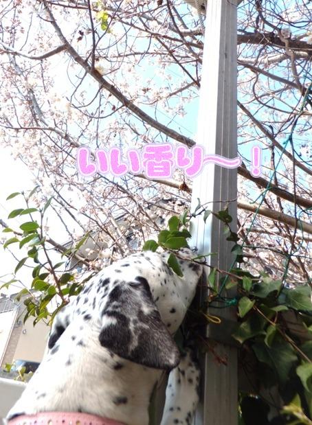 blog_0315_105206.jpg