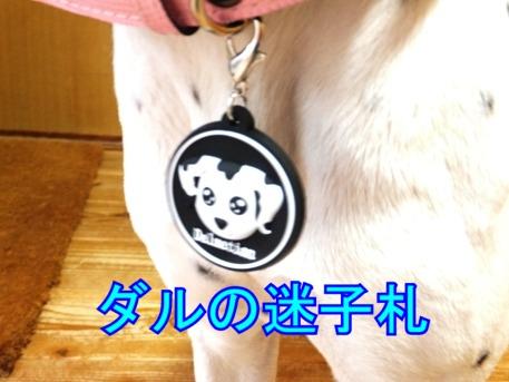 blog_0425_190244.jpg