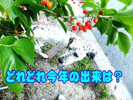 blog_0504_163529.jpg