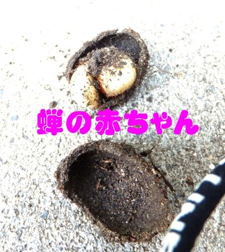 blog_0506_112110.jpg