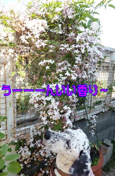 blog_0511_090000.jpg