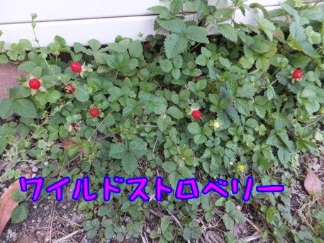 blog_0525_185040.jpg
